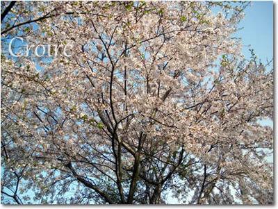 0419-2-thumbnail2.jpg