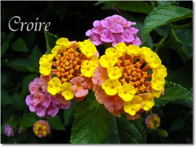 0621-flower-1.jpg