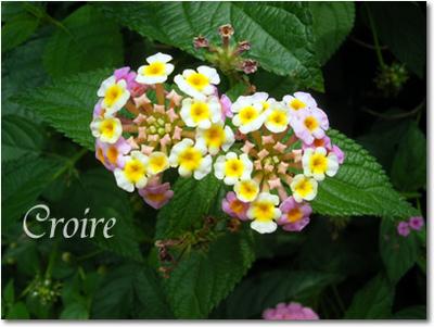 0621-flower-2.jpg