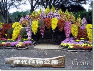 akibara-a.jpg
