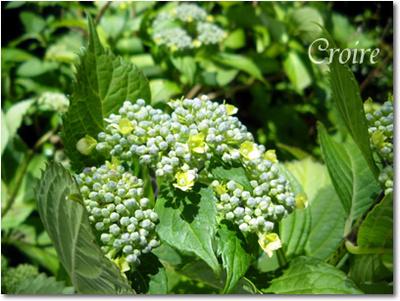 flower-10.jpg