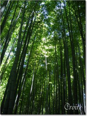 hokokuji-11.jpg