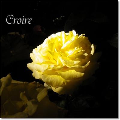 rose-19-goldmedaiyon.jpg
