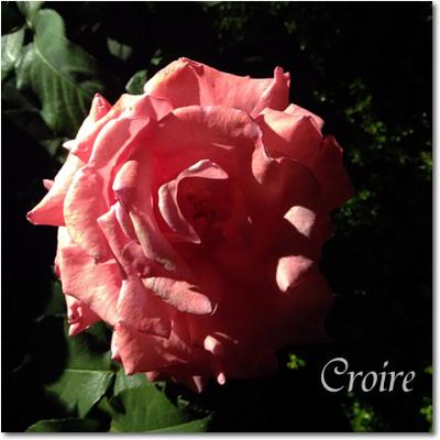 rose-21-aromaterapy.jpg