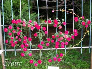 rose-32.jpg