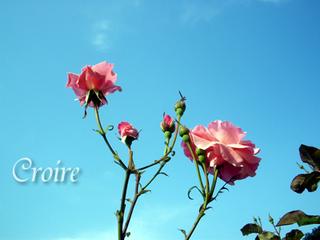 rose-36.jpg