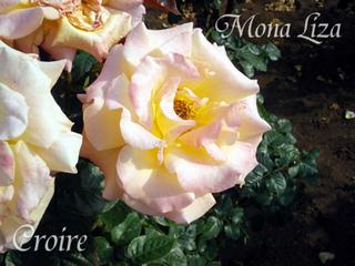rose-42a.jpg