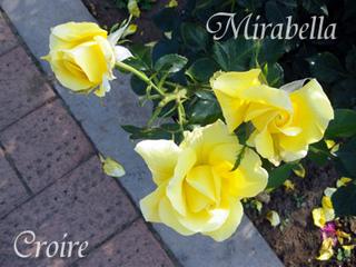 rose-44a.jpg