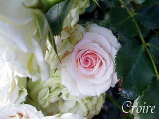 rose-76.jpg